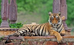 Ranthambore-National-Park.jpg
